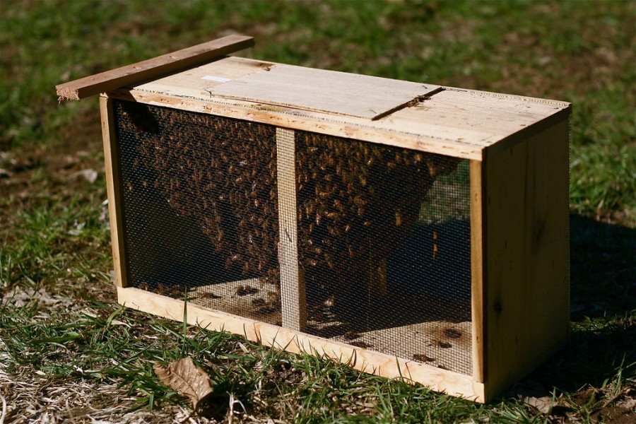 Bee packages usually come with 3 lbs worth of bees