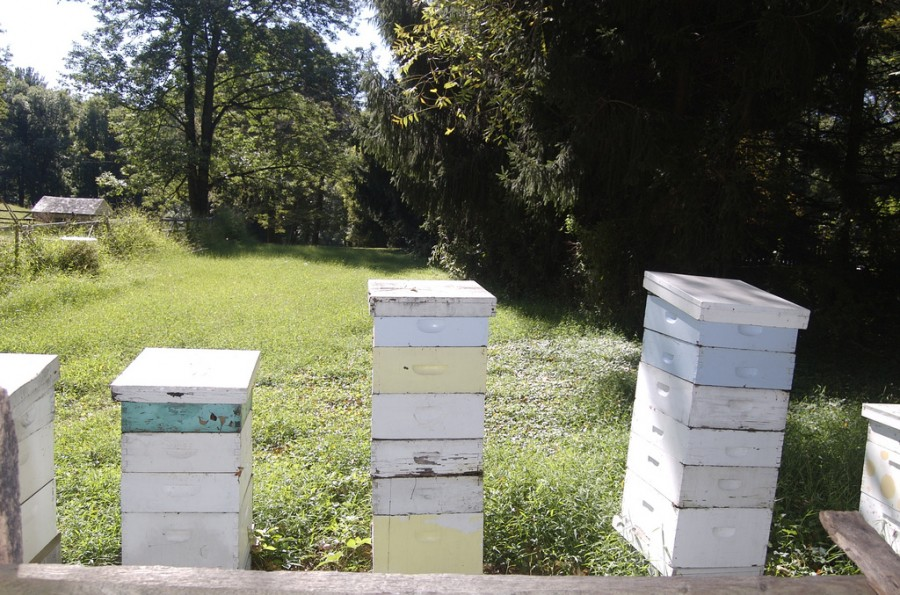 Langstroth hives force bees to build upward as beekeepers stack more boxes (supers) on top.