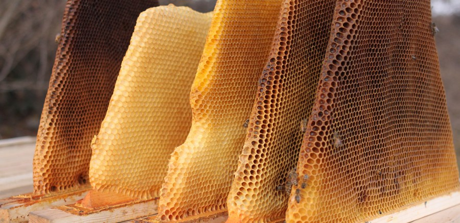 Get chemical-free wax with our top bar hives
