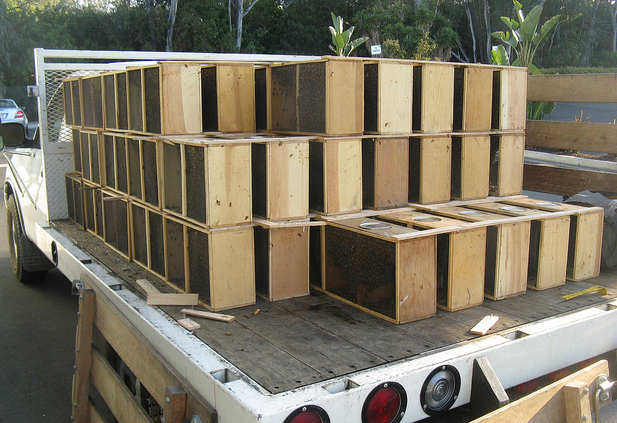 Packaged bees on truck ready for delivery