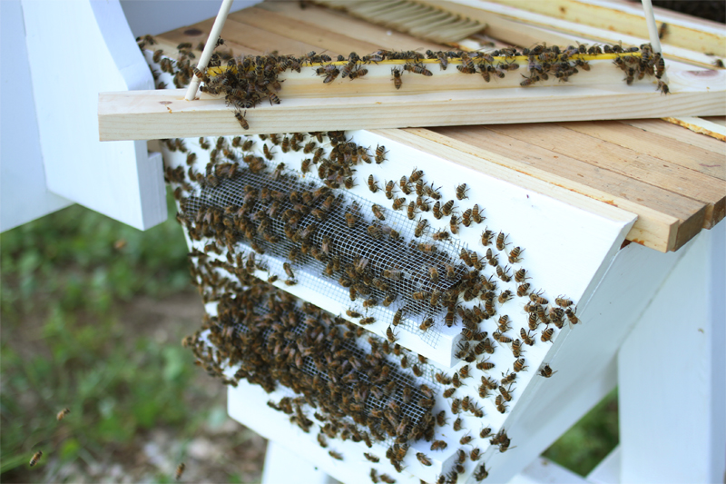 The Best Top Bar Hive Wild Bunch Bees