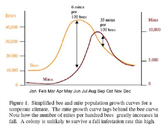 Varroa mite and honey bee population curve growth